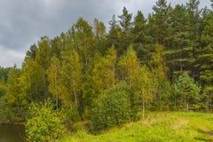 Foresta d'autunno Immagine Stock Libera da Diritti