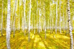 Foresta d'autunno Immagine Stock