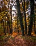 Foresta d'autunno Fotografia Stock