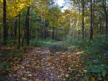 Foresta d'autunno Immagini Stock Libere da Diritti