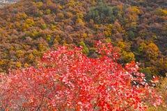 Foresta d'autunno della montagna Immagini Stock