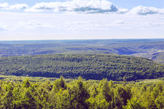 Foresta da sopra Fotografia Stock Libera da Diritti
