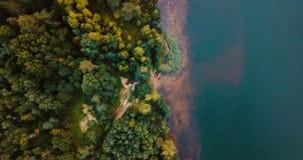 Foresta dal lago e conifere nel Nord Vista superiore del fuco aereo Abbellisca con i pini e l'abete, il giorno soleggiato dentro archivi video