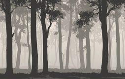 Foresta decidua Fotografia Stock Libera da Diritti