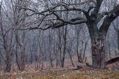 Foresta decidua in autunno tardo Fotografie Stock