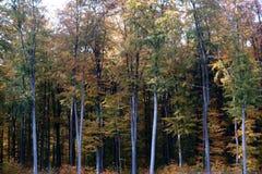Foresta decidua del bordo della foresta fotografia stock