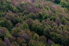 Foresta decidua nei colori di autunno Cambiamento stagionale temperato per fotografie stock