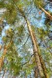 Foresta deciduo-conifera mista Fotografia Stock