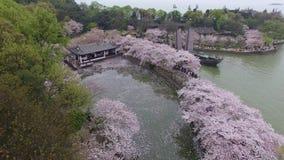 Foresta dei fiori di ciliegia archivi video