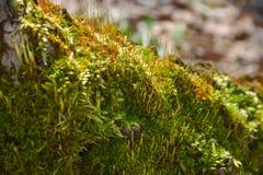 Foresta dei funghi Immagini Stock