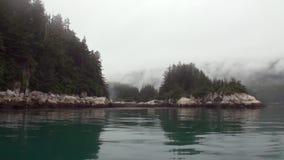 Foresta dei pini e dell'abete rosso sulla costa rocciosa del fondo dell'oceano Pacifico nell'Alaska archivi video