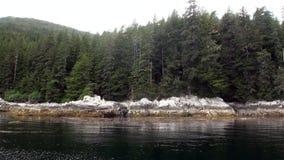 Foresta dei pini e dell'abete rosso sulla costa rocciosa del fondo dell'oceano Pacifico nell'Alaska stock footage