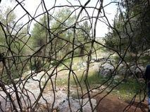 Foresta del ayin del ` di Rosh ha Fotografia Stock