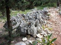 Foresta del ayin del ` di Rosh ha immagine stock