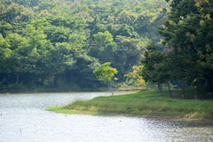 Foresta del bacino idrico Fotografie Stock