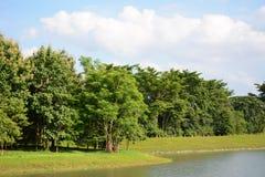 Foresta del bacino idrico Immagini Stock Libere da Diritti