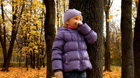 foresta del bambino di autunno stock footage