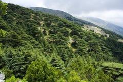 Foresta del cedro nel Libano Immagini Stock Libere da Diritti