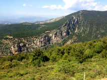 Foresta del cedro nel Libano Fotografia Stock