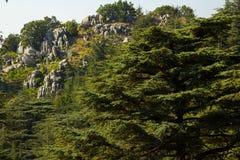 Foresta del cedro nel Libano Fotografia Stock Libera da Diritti