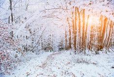 Foresta del faggio della montagna di ottobre con la prima neve di inverno Immagine Stock Libera da Diritti