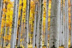 Foresta del faggio di autunno Fotografie Stock