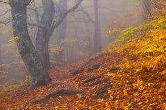 Foresta del faggio di autunno Fotografie Stock Libere da Diritti