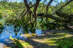 Foresta del faggio indigeno della Nuova Zelanda Immagini Stock Libere da Diritti