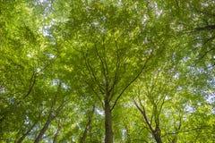 Foresta del faggio nel parco nazionale di Jasmund vicino a Sassnitz fotografia stock