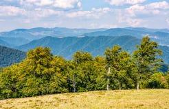 Foresta del faggio sul prato della cresta dell'alta montagna Fotografia Stock Libera da Diritti