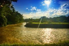 Foresta del fiume Immagine Stock