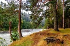 Foresta del fiume Fotografie Stock Libere da Diritti
