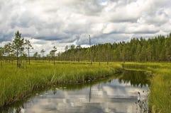 Foresta del fiume in Finlandia Fotografie Stock