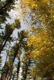 foresta del fogliame Fotografia Stock