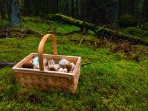 Foresta del fungo Fotografia Stock Libera da Diritti