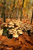 Foresta del fungo di autunno Immagini Stock Libere da Diritti