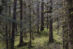 Foresta del Kodiak immagine stock libera da diritti