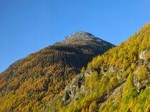 Foresta del larice dorato vicino a Zermatt Fotografie Stock Libere da Diritti