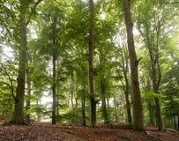Foresta del legno di faggio vicino a Kleve Immagine Stock Libera da Diritti