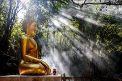 Foresta del monaco Immagini Stock Libere da Diritti