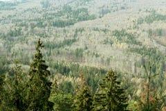 Foresta del moutain di autunno Immagini Stock Libere da Diritti