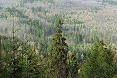 Foresta del moutain di autunno Immagine Stock