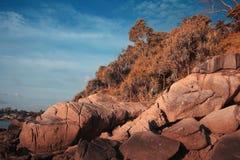 Foresta del paesaggio di autunno Immagini Stock Libere da Diritti
