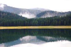 Foresta del parco nazionale di durmitor nel Montenegro fotografia stock