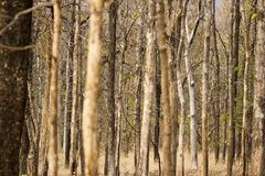 Foresta del parco nazionale di Pench, deciduo ed asciutto fotografie stock