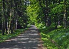 Foresta del percorso della strada in primavera con nontiscordardime di fioritura fotografia stock