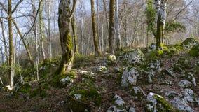 Foresta del picco di Ahun Fotografie Stock Libere da Diritti