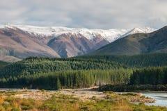 Foresta del pino al fiume di Wairau, isola del sud, Nuova Zelanda Fotografie Stock Libere da Diritti