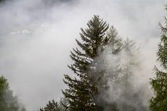 Foresta del pino nella nebbia Fotografie Stock Libere da Diritti