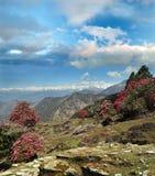 Foresta del rododendro in Himalaya Fotografia Stock